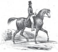 Treatise on equitation, or The art of horsemanship Simplified Progressively for Amateurs Forming Complete Lessons for Training Horses and Instructions for Beginners Illustrated with Twenty-Seven Descriptive Plates